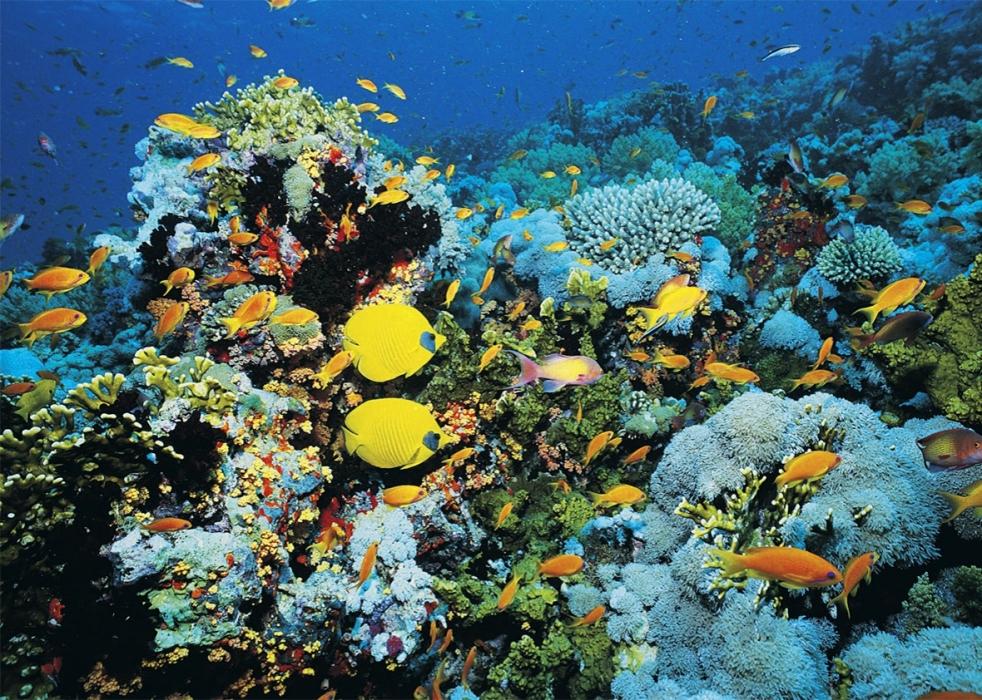 160429_SCI_coral-reef.jpg.CROP.promo-xlarge2